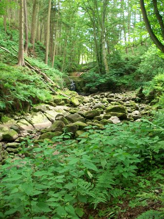 Studfold Walks and Trails