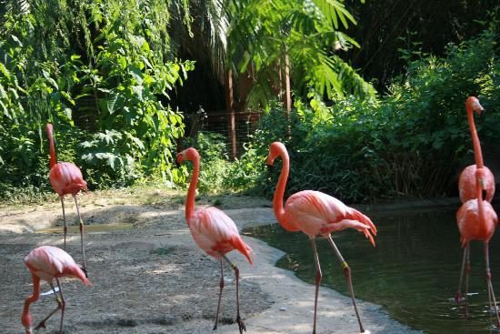 Riverbanks Zoo and Botanical Garden: Flamingos!