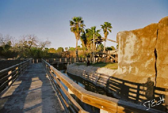 Gladys Porter Zoo: boardwalk near chimpanzees