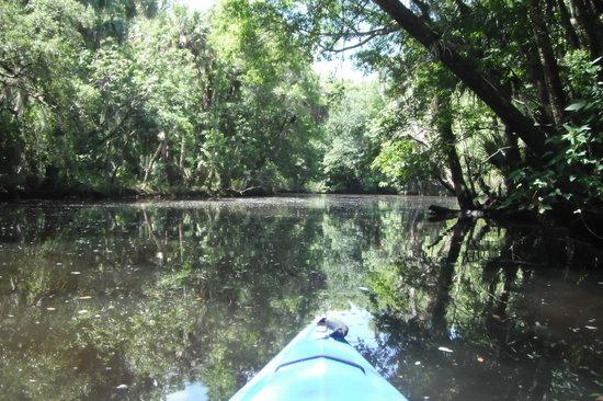 Cracker Creek: Spruce Creek is one of the few blackwater rivers in Florida