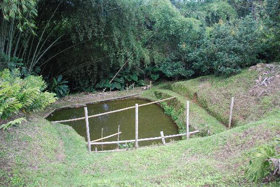 Finca Villa Martha: fish pool