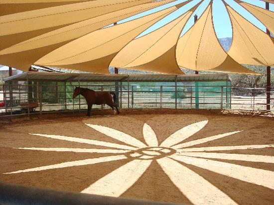 Miraval Arizona Resort & Spa: Miraval: Equine Experience