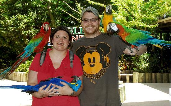 Jungle Island: Parrots