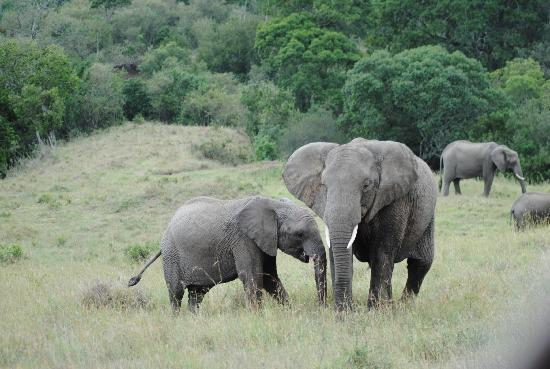 Kilima Camp: Elephants on the Mara