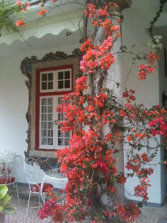 Pergola House: Flowers everywhere
