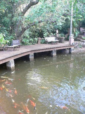 Timamoon: The zen Koi pond - a peaceful haven.