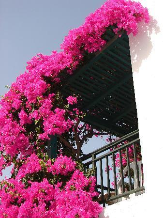 SuneoClub Chrissi Amoudia : Gardens2