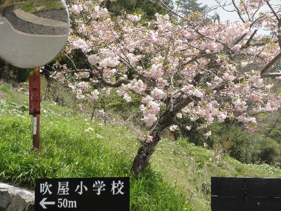 Fukiya Furusato Village: 桜