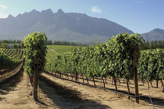 Auberge de Courtrai: Vineyards