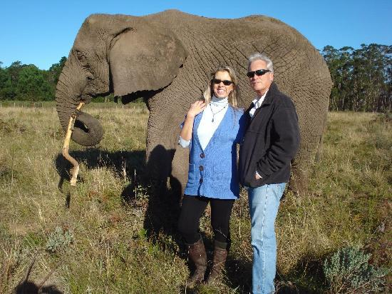 Knysna Elephant Park Lodge: Walking with the elephants