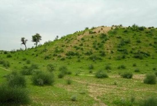 Beauty of Thar