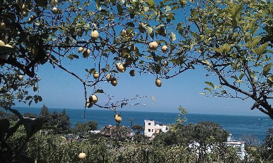 Hotel Parco Conte: Dal terrazzo tra i limoni