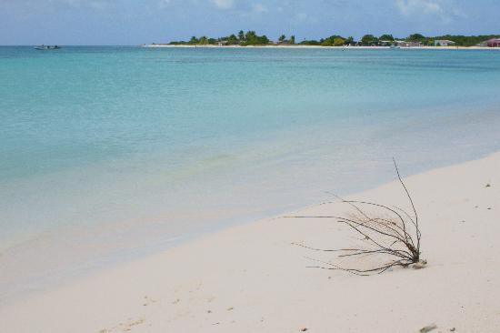 Posada Piano y Papaya Los Roques: La spiaggia di Crasqi, probabilmente la più bella