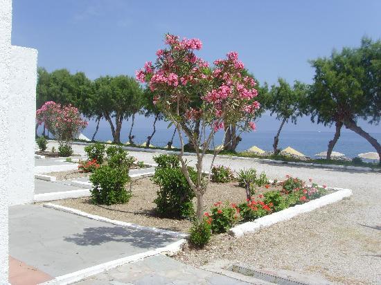 Dimitra Beach Hotel: jardin dévant les bungalows,plage