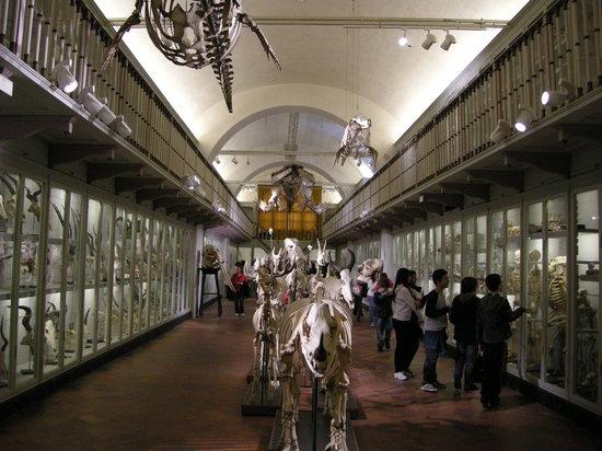 Museo di Storia Naturale - La Specola