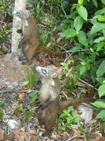 Grand Palladium Kantenah Resort and Spa: des animaux qu'on croise le matin