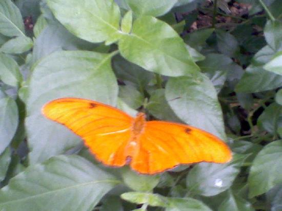 Grand Junction, CO: One of the butterfly's