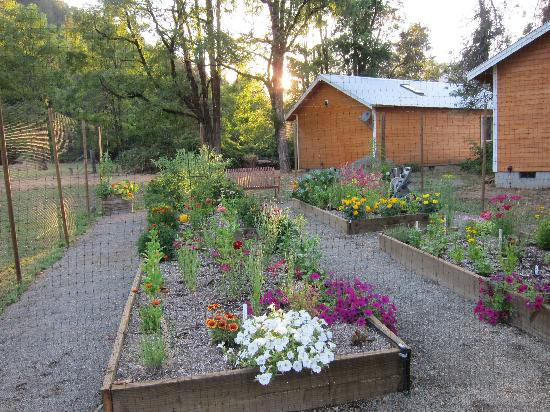 Coho Cottages: Herb garden