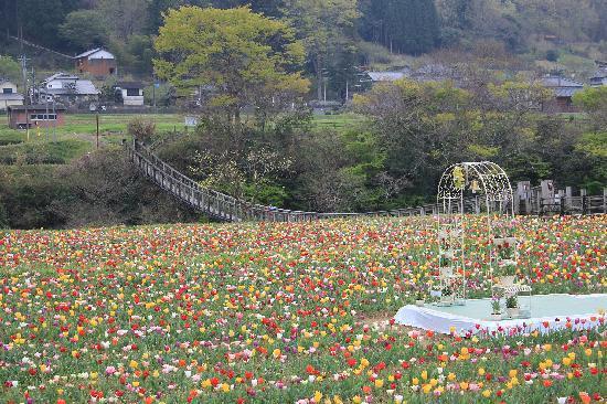 Bungoono, Japonya: つり橋とチューリップ畑