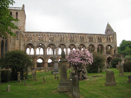 Willow Court: Jedburgh abbey