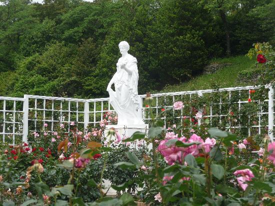 Ikuta Ryokuchi Rose Garden : ばらがみごとです