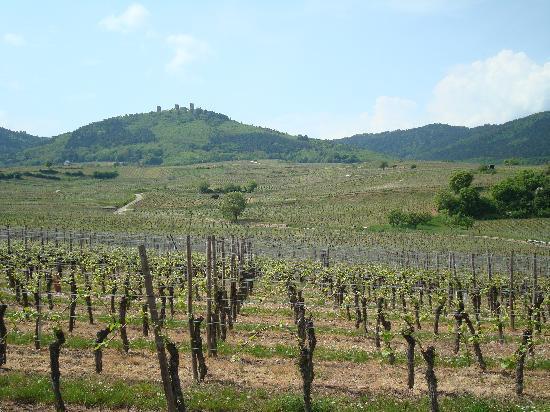 Ammerschwihr, Francia: Les vignes en avril