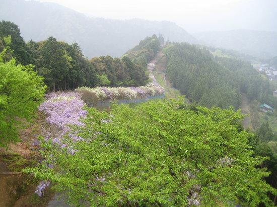 Hidakagawa-cho, ญี่ปุ่น: 尾根に続く藤棚