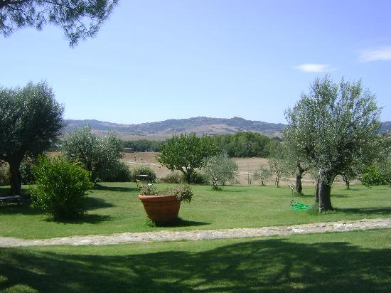 Uno scorcio del giardino con gli ulivi foto di - Giardino con ulivi ...