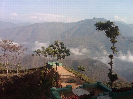 Glenburn Tea Estate : View from my window