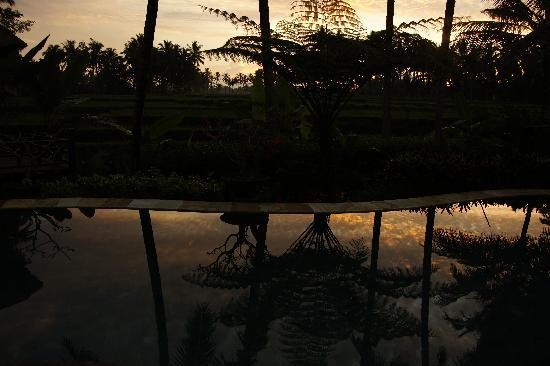 Villa Orchid Bali: Morgenstimmung am Pool