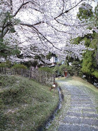 Nara Hotel: 庭に桜の花びらを食む鹿の姿