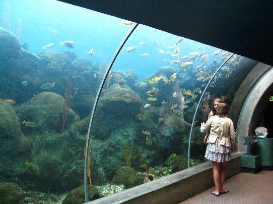 The Florida Aquarium : Tunnel like tank to walk through.
