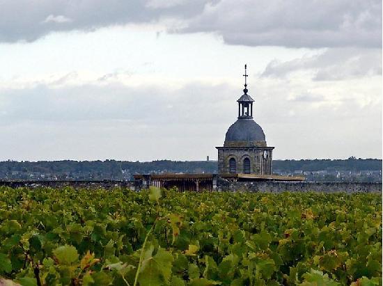 Chateau Gaudrelle, Vins de Vouvray: La vigne