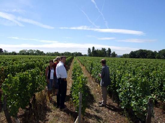 Chateau Gaudrelle, Vins de Vouvray: Visite de la vigne