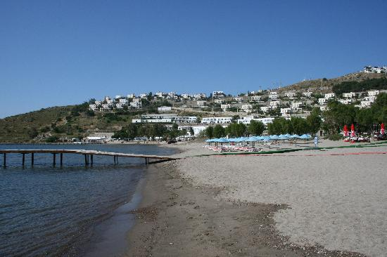 Hotel La Rosa: Camel Beach