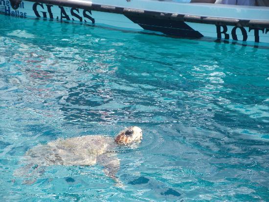 Atlantis Hotel: Turle Cruise