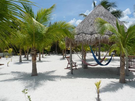 Zomay Hotel Holbox : jardin tropical