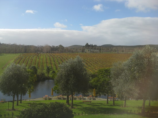 Auckland Fine Wine & Food Tours: View from one of the wineries