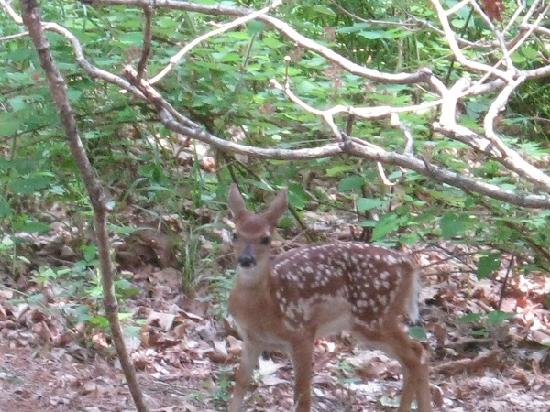 ‪‪Dogwood Cottages‬: Newborn Fawn‬