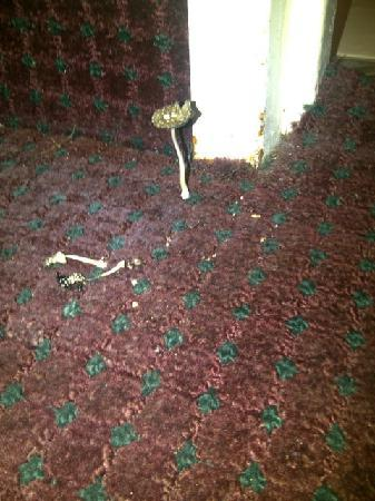 Days Inn New Orleans: Yeah that is mushrooms growing from the carpet!