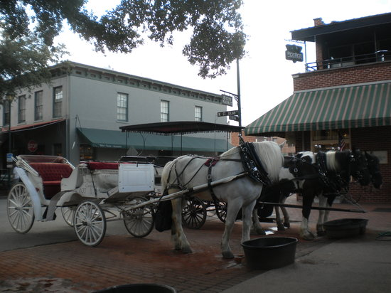 Carriage Tours of Savannah : A horse & carriage for private tours next to our horses & carriage.