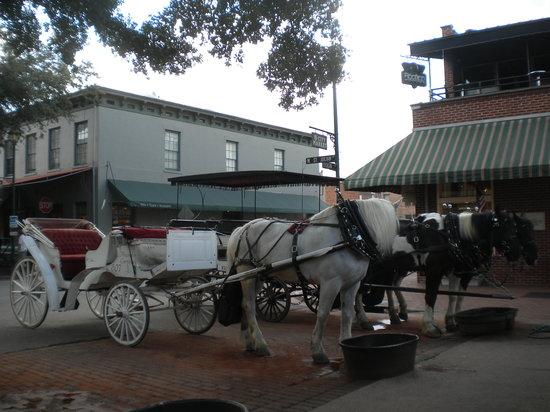 Private Carriage Tours In Savannah Ga