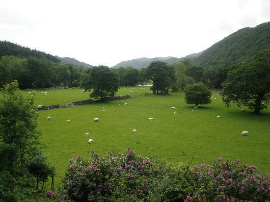 Tal-Y-Bont Country House B&B: View from bedroom window
