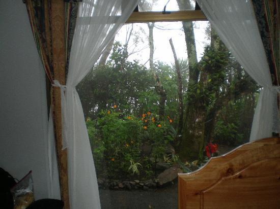 Hotel Las Orquideas: Blick vom Zi. in den Garten