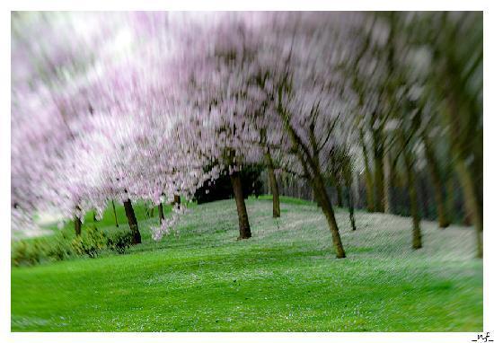 Hasselt, Belgio: Japanese garden in spring