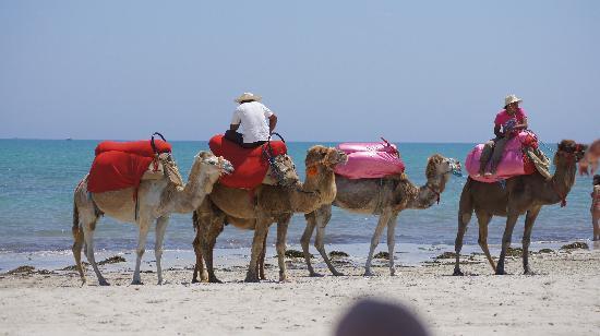 SENTIDO Djerba Beach : balades en dromadaires