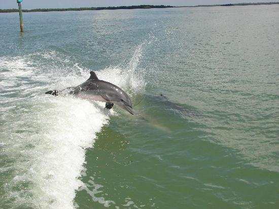 Estero Bay Express Dolphin & Sunset Boat Tours: Another dolphin playing
