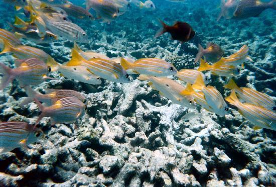 คุรีดุ ไอแลนด์ รีสอร์ท แอนด์ สปา: The sea is beautiful