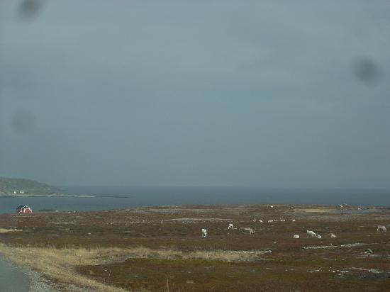 Finnmark, Noorwegen: renne