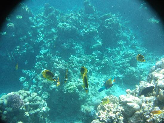 Pyramids Diving Center: Underwater shot